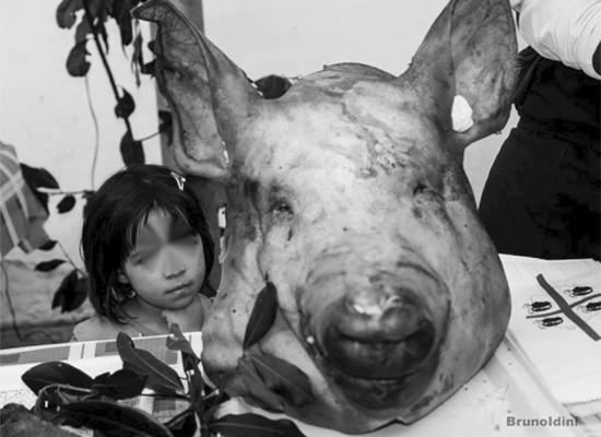Sassari porca…